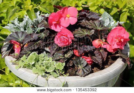 Ceramic flower pot with a decorative flower arrangement.