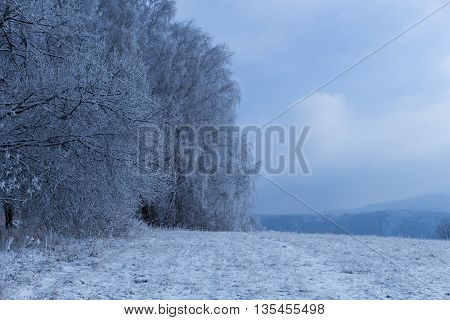 Winter trees covered with fresh snow in mountains