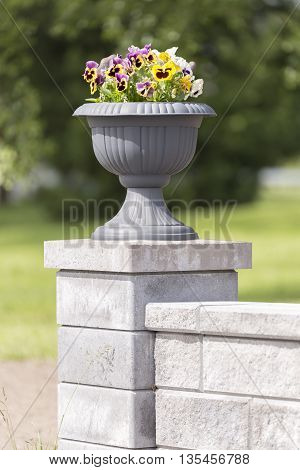 Garden Pansies in Flower Pot standing on concrete pillar.