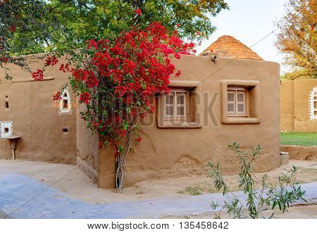 Cottage of earth with twining tree, Mandawa, Rajasthan, India