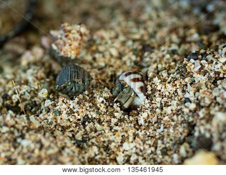 Hermit Crab macro with blur background on sand beach in costa Rica