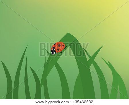 Ladybug on grass blade with gradient mesh background.