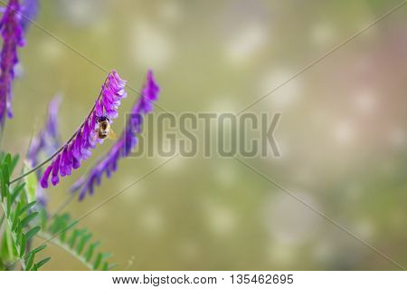 bird vetch with a bee against a blurred background