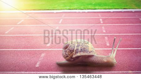 Snail on a white background against race track