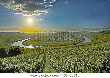 Famous Moselle Sinuosity In Trittenheim