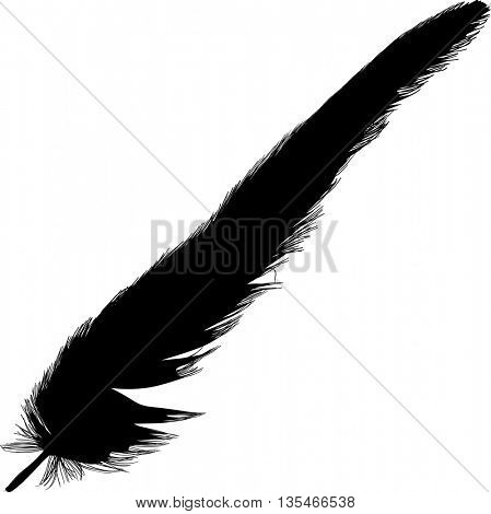 illustration with single black feather on white background