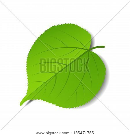 Vector green leave isolated on a white background