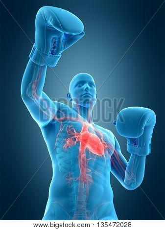 3d rendered, medically accurate 3d illustration of a boxing pose