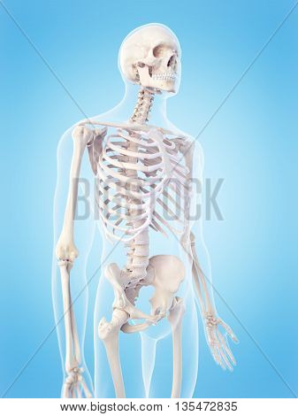 3d rendered, medically accurate 3d illustration of the skeletal torso