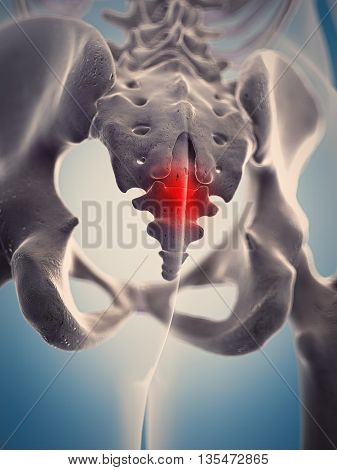 3d rendered, medically accurate 3d illustration of the human highlighted cocycx