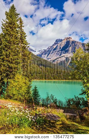 Beautiful autumn day on the Emerald Lake. Blossoming glade in coniferous forest. Rocky Mountains, British Columbia