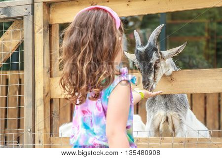 outdoor portrait of young happy young girl feeding goat on farm