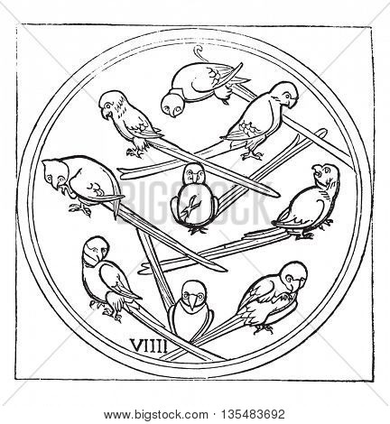 Nine of Parrot, or Bird, vintage engraved illustration. Magasin Pittoresque 1836.