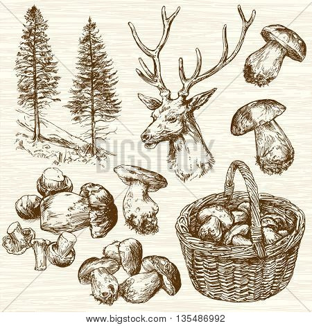 Basket of mushrooms in forest. Hand drawn set.