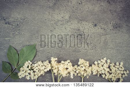 Vintage Photo, Elderberry Flowers With Leaves On Structure Of Concrete, Copy Space For Text
