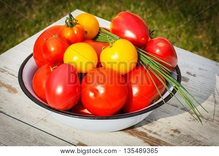 Tomatoes In Metal Bowl With Green Chives In Garden On Sunny Day
