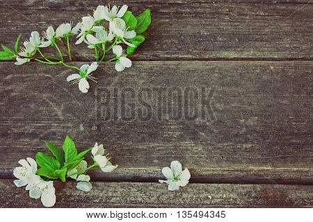 blossoming plum branch lies on old wooden table retro toned