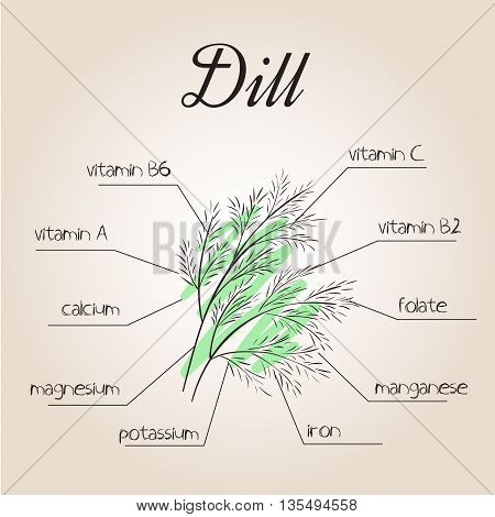 vector illustration of nutrients list for dill.
