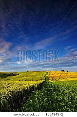 rural landscape on the solstice on twilight with fields unripe rye and unripe barley and blue sky with clouds. This is
