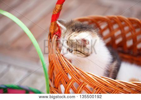 Kitten in basket. Warm summer sunny day.