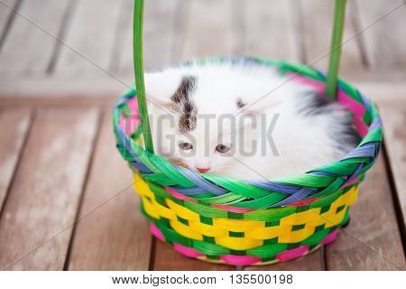 Kittens in a colorful basket. Summer sunny day.