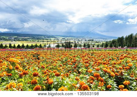 beautiful flower farm in japan hokkaido