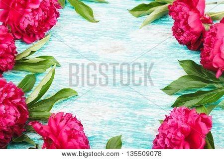 Frame from big crimson peonies on the light blue background