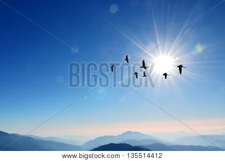 Flying birds over background landscape with solar sky
