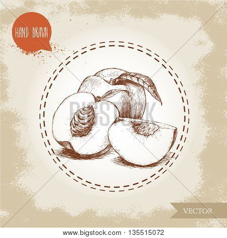 Hand drawn sketch style peach fruit. Vintage eco food vector illustration. Ripe peach peach slices. Grunge background.