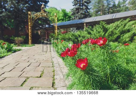 Red tulips near garden path. Landscape design of garden. Modern landscaping. Flowerbed and evergreen bushes.