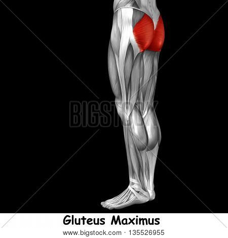 Concept or conceptual 3D illustration human upper leg anatomy or anatomical and muscle isolated on black background