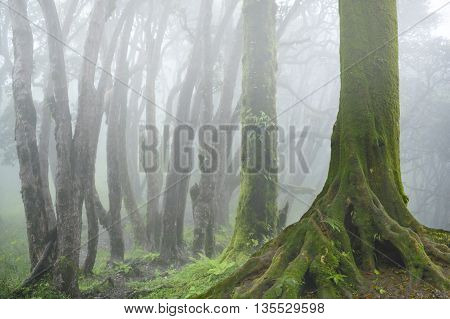 tropical jungles of Nepal with morning fog