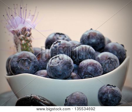 blueberries with a very large grain. contain many antioxidants