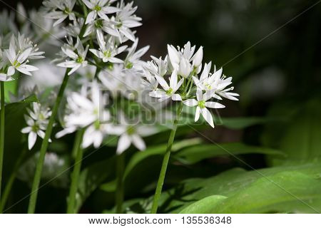 a bouquet of beautiful flowers with white petals. nature amazes