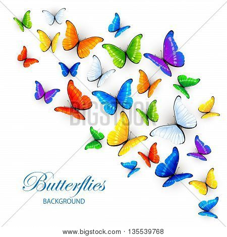 Set of multicolored butterflies, isolated on white background, illustration.
