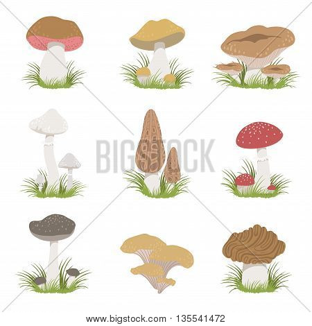 Different Mushrooms Realistic Set Of Flat Pale Color Detailed Drawings Isolated In White Background