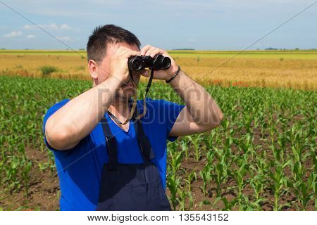 Farmer with binoculars observe birds in corn field