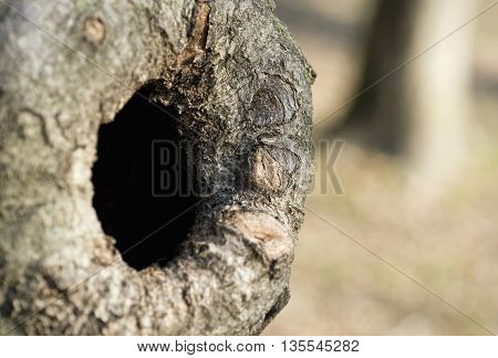 a knothole in a tree trunk in the woods