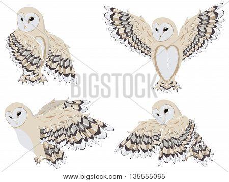 Cartoon Barn Owl