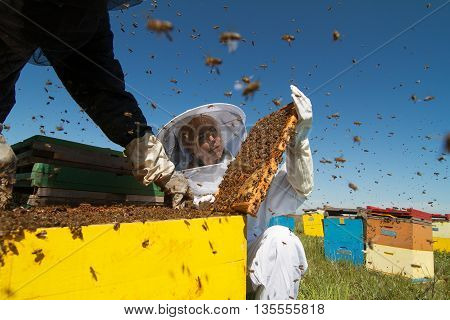 Horizontal close up of a beekeeper in white protection suit watching over his bee hives on a green field