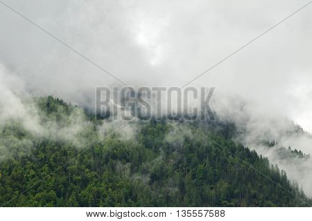 Landscape scenic view of green pine forest high mountain in low clouds during summer in Europe