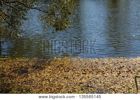 Fallen leaves in autumn pond on a sunny day