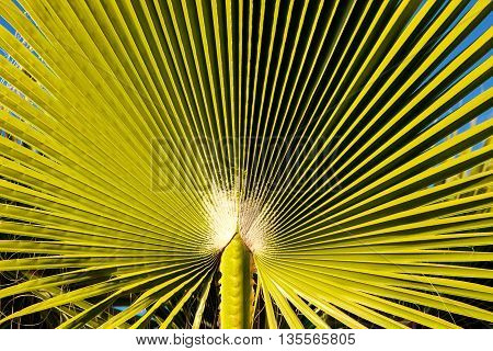 Detailed and vibrant green palm tree leaf texture
