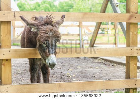 donkey on farm behind wooden fence