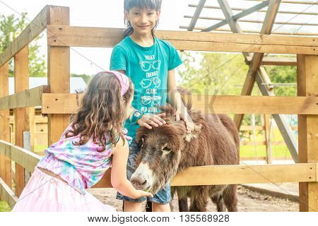 outdoor portrait of young happy young girl and boy feeding donkey on farm