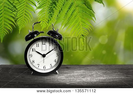 Alarm clock and Fern branches hanging down on wood with blurry green bokeh in background. Concept of time.