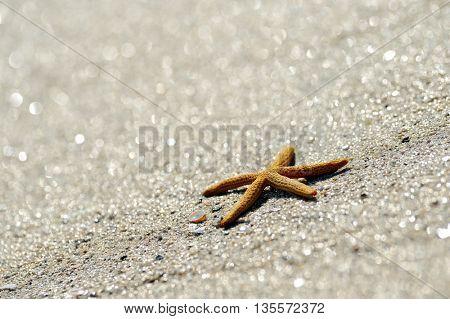 starfish on wet sand