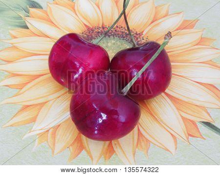 Three fresh cherries on sunflower background .