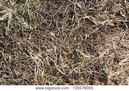 Dry last years grass at spring with young grass
