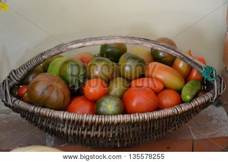 basket with different varieties of tomatoes. still life